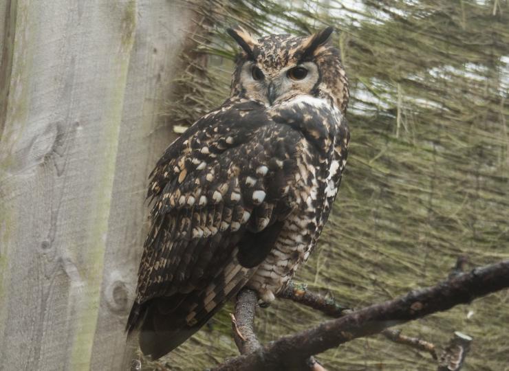 FOTOD! Loomaaed kutsus isadepäeval kakke uudistama