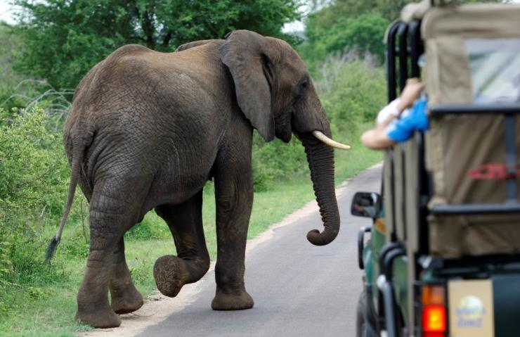Sambias trampis elevant surnuks kaks turisti