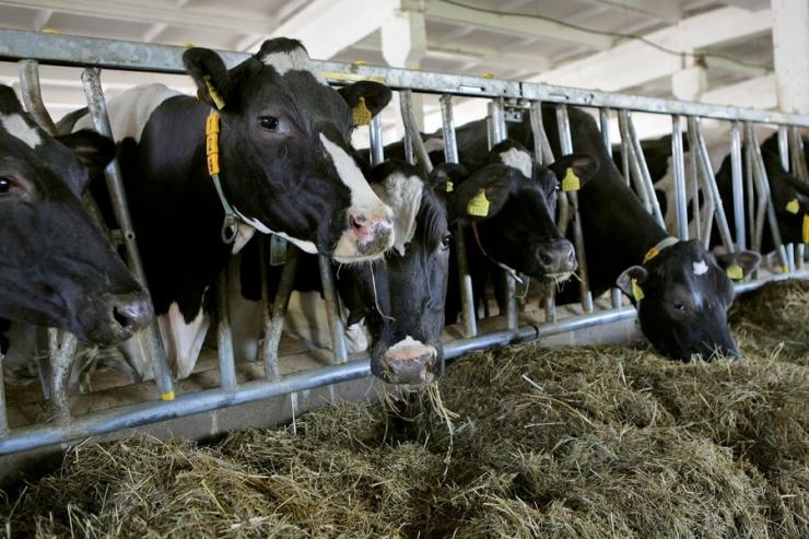 Inspektsioon soovitab põllumeestel sõnniku laotamisega kiirustada