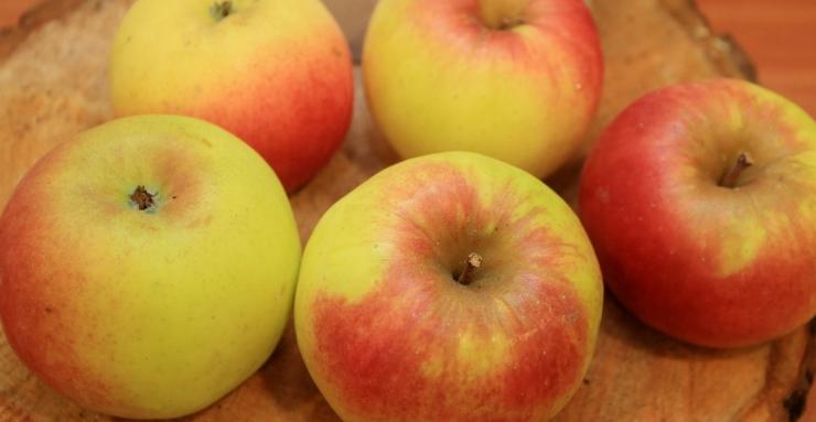 """Põllumajandusamet: kauplused peavad kõrvaldama müügilt õunad """"Renett"""" ja """"Kuldrenett"""""""