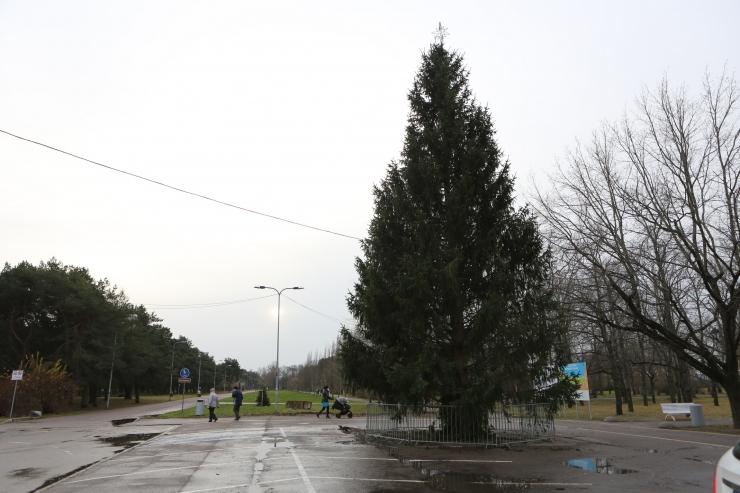 Jõulukuusk jõudis Põhja-Tallinnasse