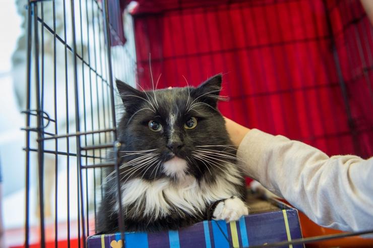 FOTOD JA VIDEO! Kertu Jukkum: täna kodust välja visatud kassist võib alguse saada 50 kassiga koloonia