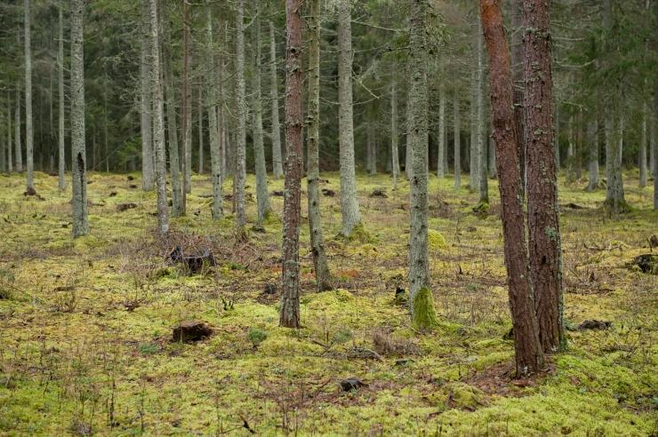 Riigikogu võttis menetlusse metsaseaduse eelnõu