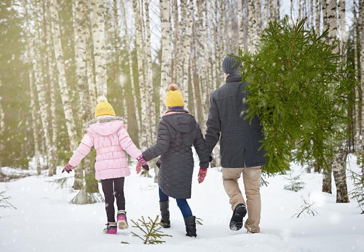 RMK pakub taas võimalust metsast jõulupuud valida