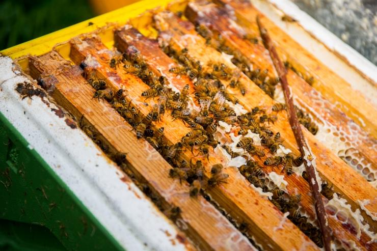 EER ja mesilaste kaitsjad nõuavad neonikotinoidide keelustamist