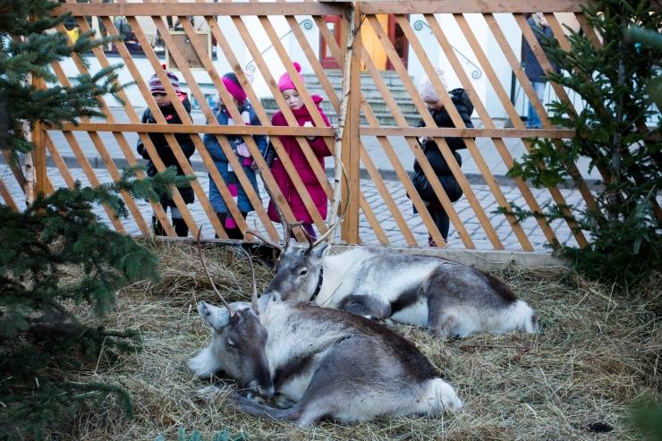 Loomade toomisest jõululaatadele peab teavitama