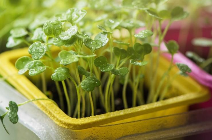 LILLEDEGA KLIIMAMUUTUSE VASTU: Teadlane aretas taime, mis imab õhust süsihappegaasi