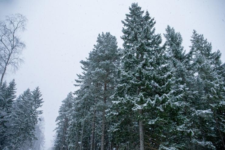Jõululaupäev tuleb päikesepaistega ja peamiselt plusskraadidega