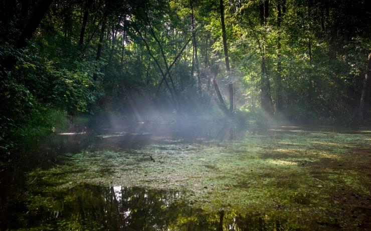 Eesti ühineb Euroopa Metsainstituudi konventsiooniga