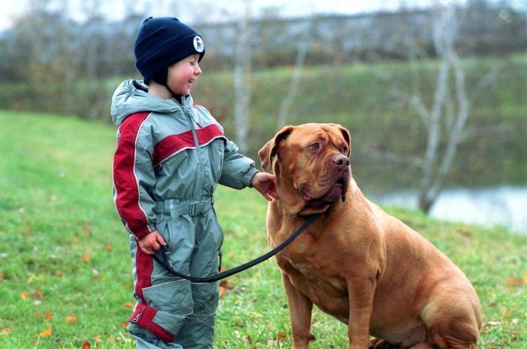 Loomakaitseliit soovitab aastavahetusel lemmikloomad toas hoida