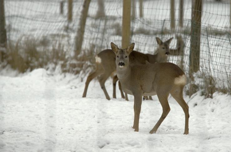 Metskitsede jälgimiseks mõeldud kaamera lõpetab töö