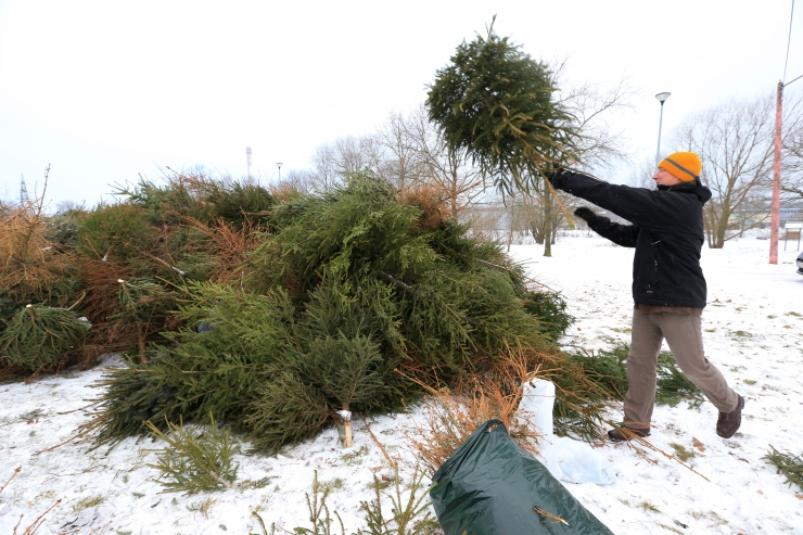 Jõulukuuskede kogumiskohad on avatud kõikides linnaosades
