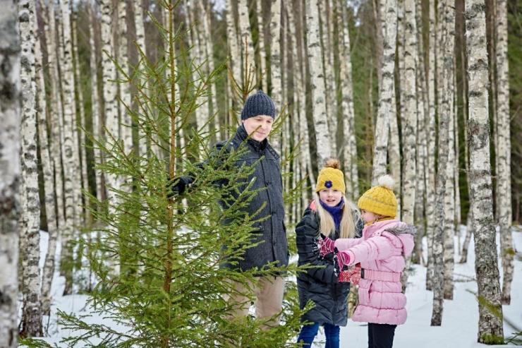 Riigimetsast toodi pühadeks üle 10 000 jõulukuuse