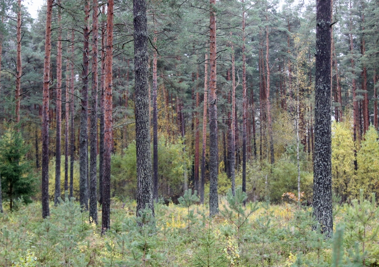 Eestlased on metsarahvas: loe, kui palju on Eestis 100 aastaga metsa juurde kasvanud