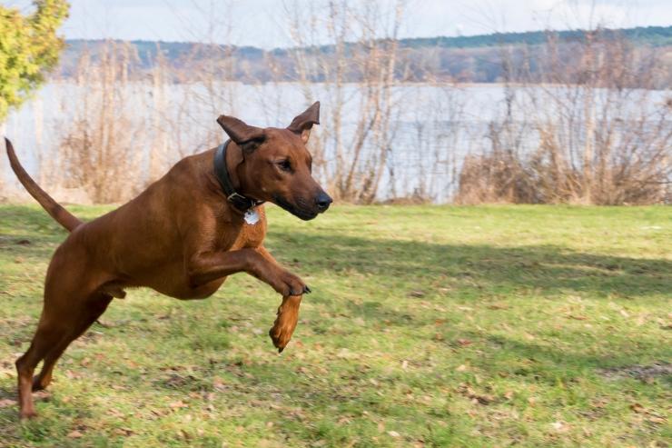 Pirital kahtlustakse koerte mürgitamist ja torusiilipommide valmistamist