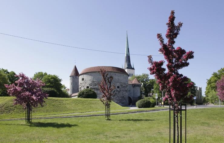 Eesti Meremuuseum Paks Margareeta sulgeb uksed kuni 2019. aasta suveni