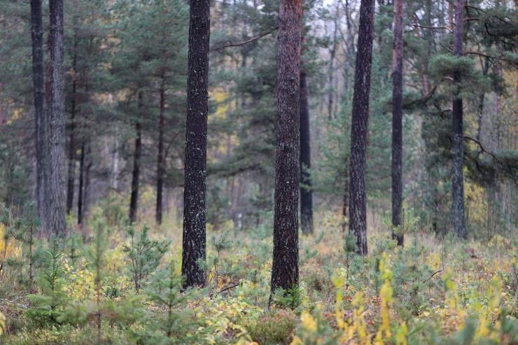 Metsakaitsjad toetavad eriolukorra kuulutamist metsades