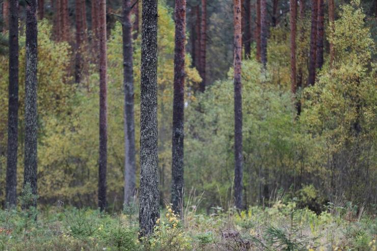 Metsaliidud: külm ilm koheselt keerulist olukorda ei lahenda