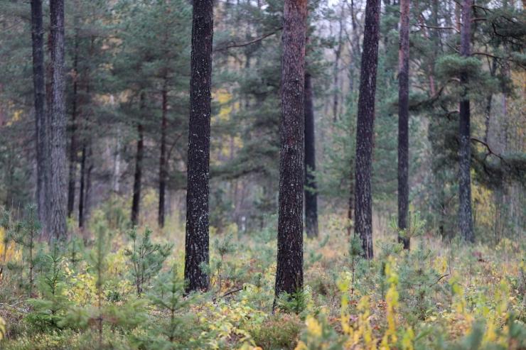 Sarapuu: riik peab looduskaitsealused alad ostma kiiremini
