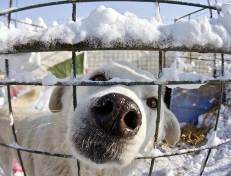 Mupo rõõmustab: veel on alles vastutustundlikke koeraomanikke