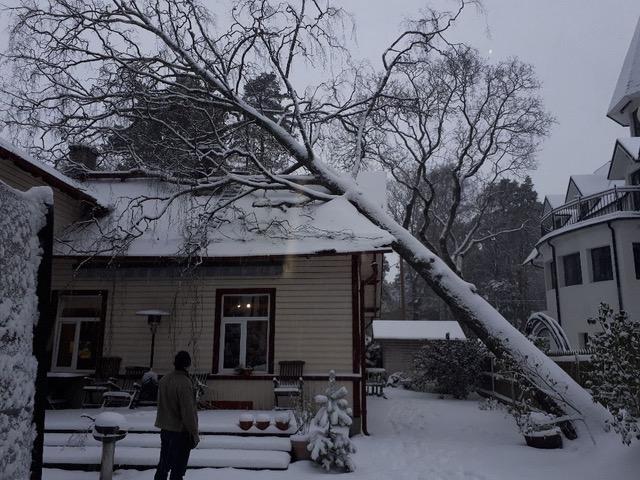 Elumajale kukkunud puu põhjustas suuri kahjusid