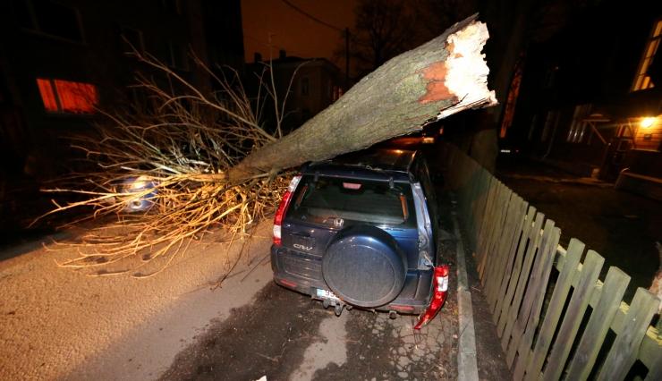 Korteriühistud hoiatavad: suured puud maja juures võivad ohtu seada elanike elu ja vara