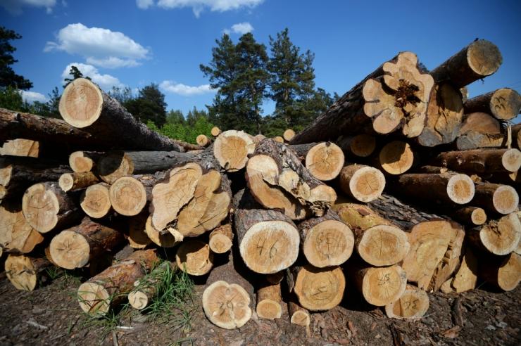 Eesti Energia konkurente väiksemas mahus puidu põletamine ei häiri