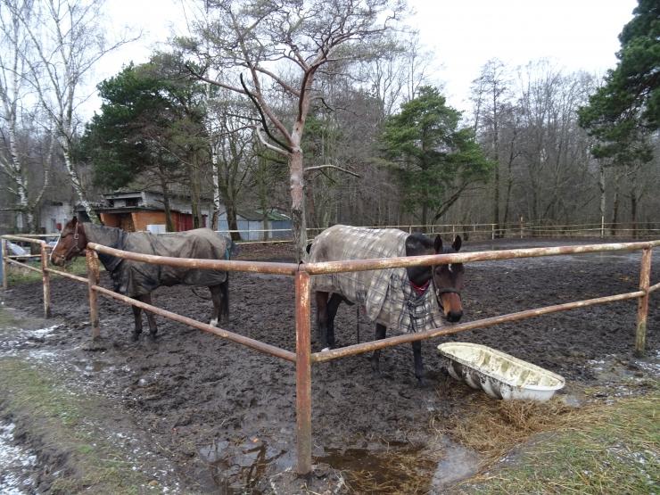 Hipodroomi lähedal ründas rihmata koer hobust