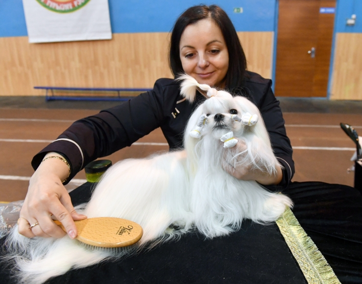 Loomade avalikul näitamisel tuleb tagada nende heaolu