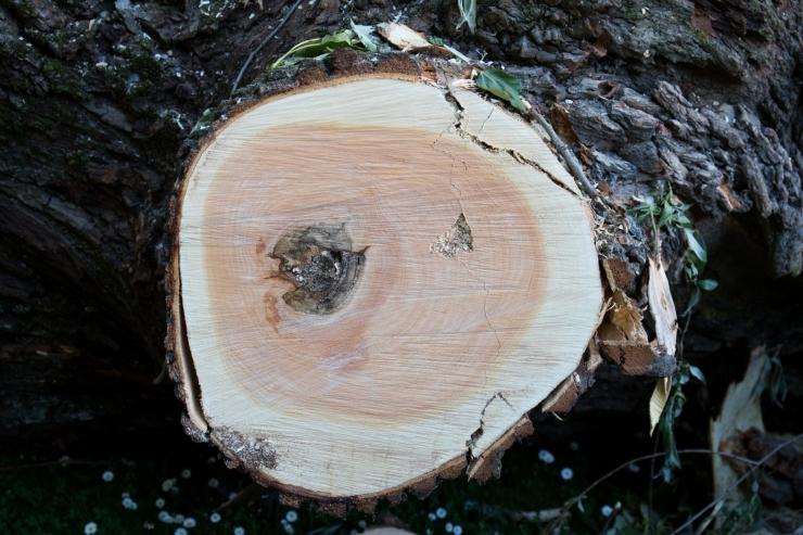 Teadlased avastasid: puit saab pressides sama tugevaks kui titaan