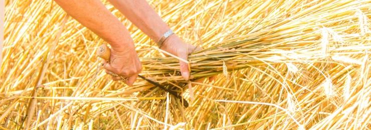 OECD VANEMÖKONOMIST: Eesti põllumajanduspoliitika lubab loodusressursse kestlikumalt kasutada