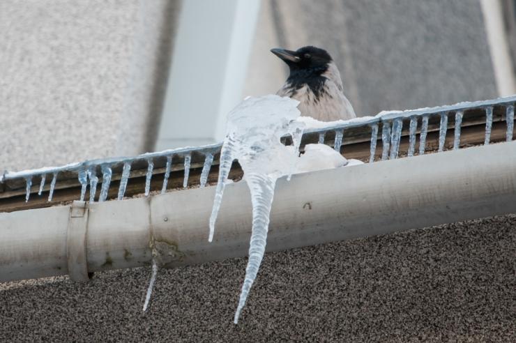 Lumi ja jää tuleb ära koristada!