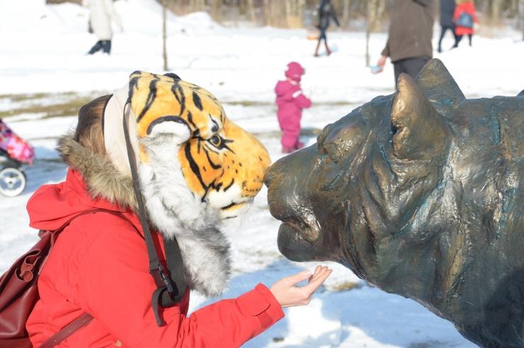 FOTOD JA VIDEOD! Loomaaia tiigrite uue kodu rajamine sai avalöögi