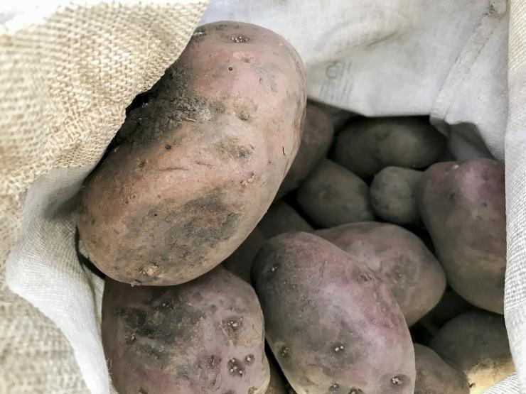 Erakorralise toetusega saavad abi kartuli- ja avamaaköögivilja kasvatajad