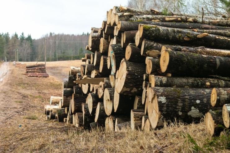 Ratas: puidurafineerimistehase otsuseks on vaja põhjalikke uuringuid