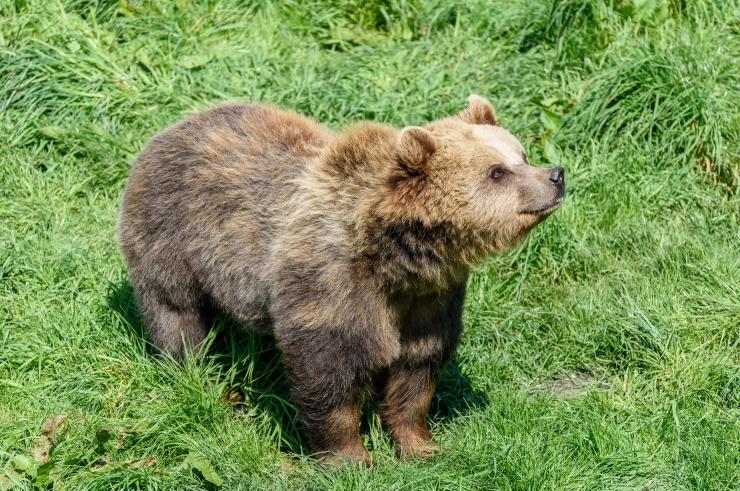 Esimesed karud on talveunest ärganud