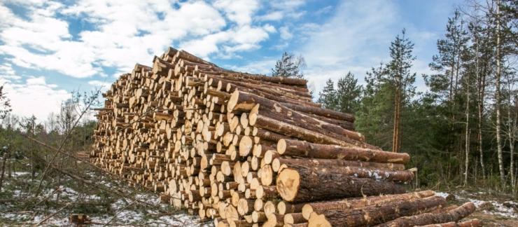 Euroopa metsainstituudi asedirektor: peame õppima elama planeedi võimete piires