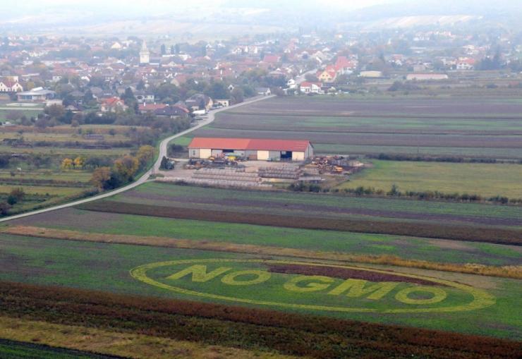 Komisjon tahaks keelustada Eestis GMO-kultuuride kasvatamise