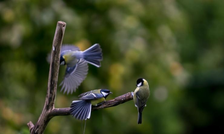 Ornitoloogid kutsuvad pühapäeval linnades linde vaatlema