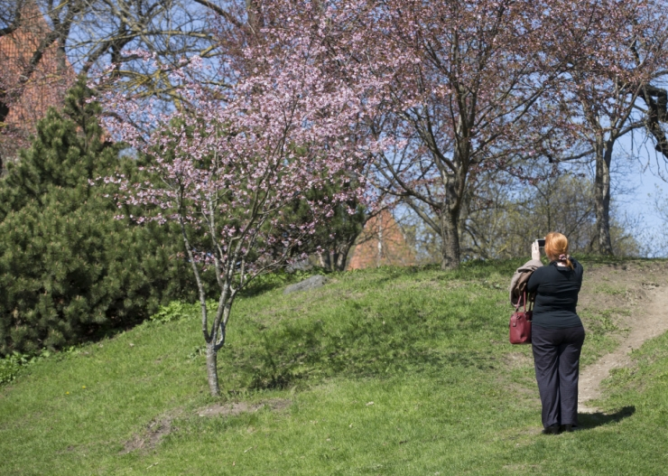 Tallinn rajab Harjumäele ruumilise pildistamistausta