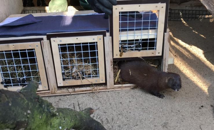 Tallinna loomaaeda saabusid temperamentsed naaritsatüdrukud Hispaaniast