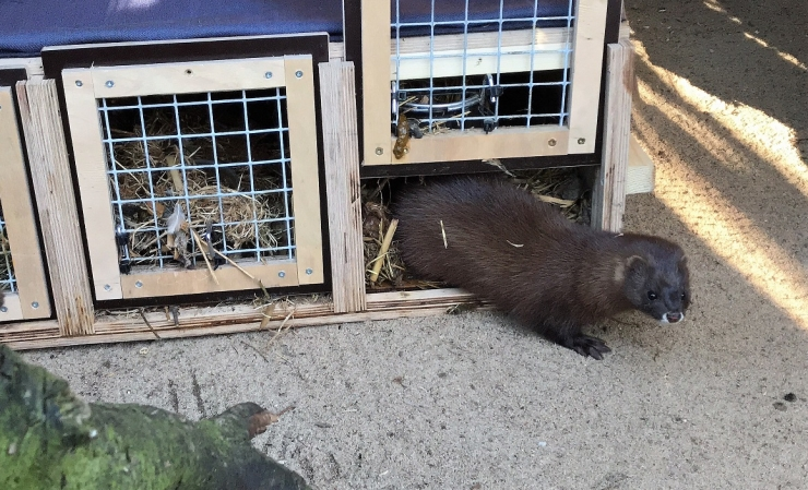 Loomaaia naaritsad said tulised Hispaania pruudid