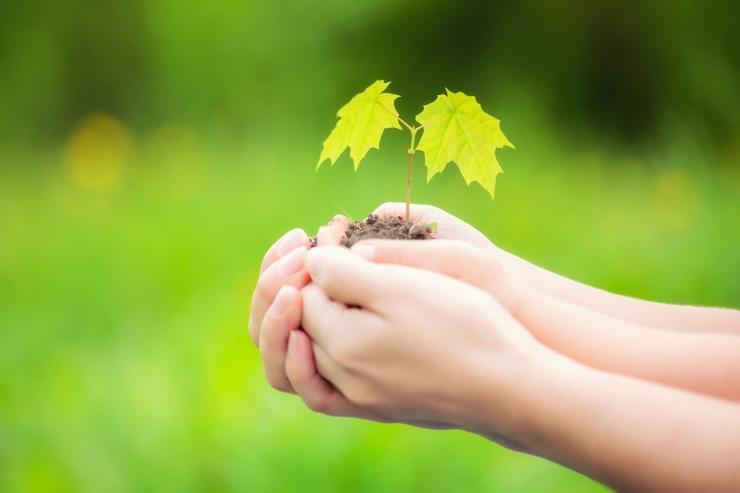 Tallinna lasteaedade õpetajad ja lapsevanemad õpivad puid istutama