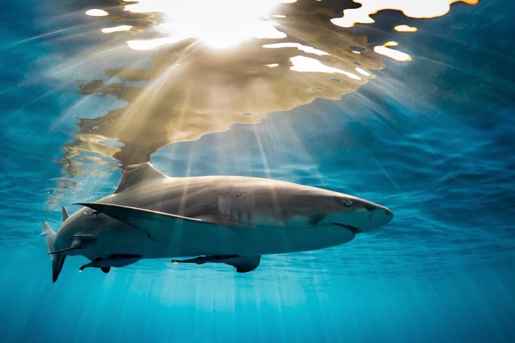 LOOMAKAITSJATE ÜLESKUTSE: Anna hääl haide kaitseks