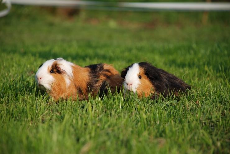 Suurbritannia teatel on Skripali lemmikloomad surnud