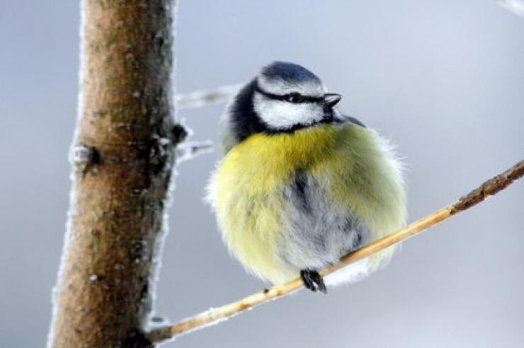 Keskkonnaagentuur kutsub Eesti juubeli puhul loodust vaatlema