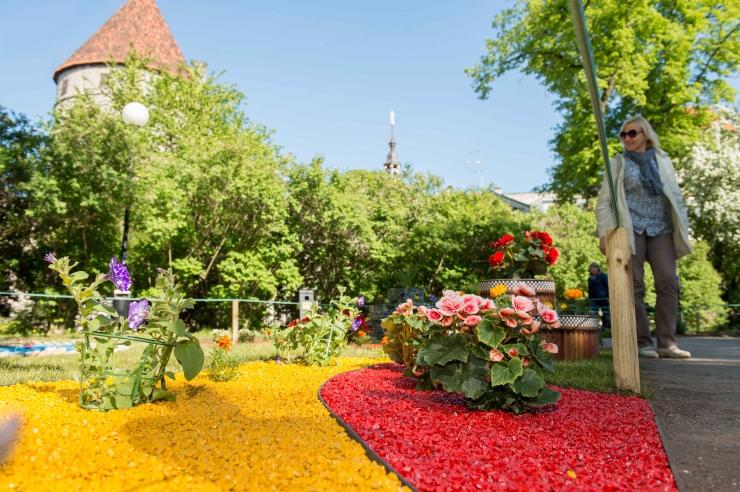 Tallinna kümnes lillefestival avaldab austust Eesti ajaloole