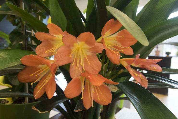 Botaanikaaed tutvustab toataimi