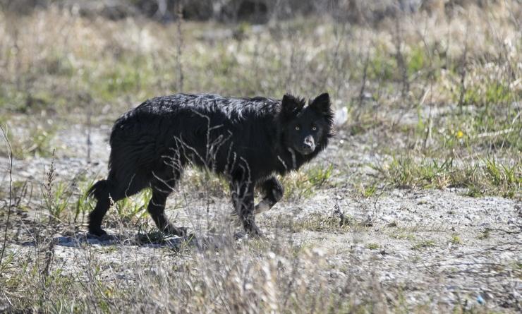 Loomakaitsjad: riik on lemmikloomade kiipimiskohustuse suhtes loid