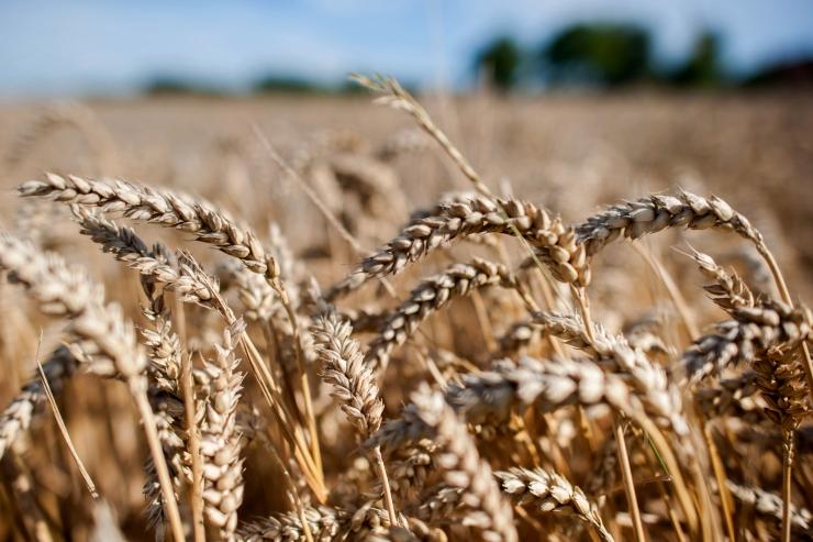 Põllumajandusele eraldatakse riigieelarvest täiendavalt 7,4 miljonit eurot